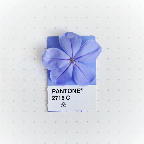 Pantone 2716 C