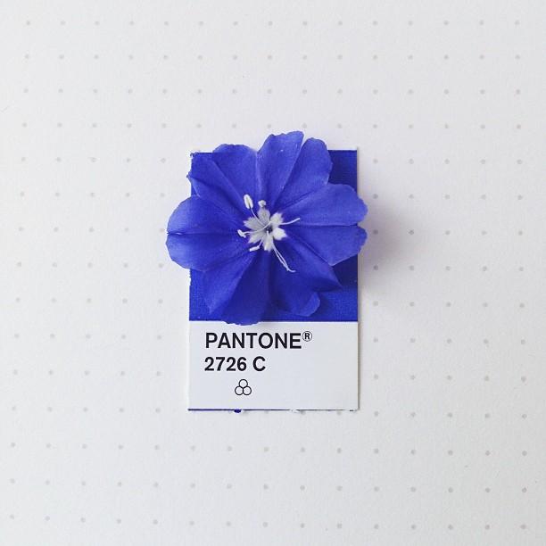 Pantone_2726_C