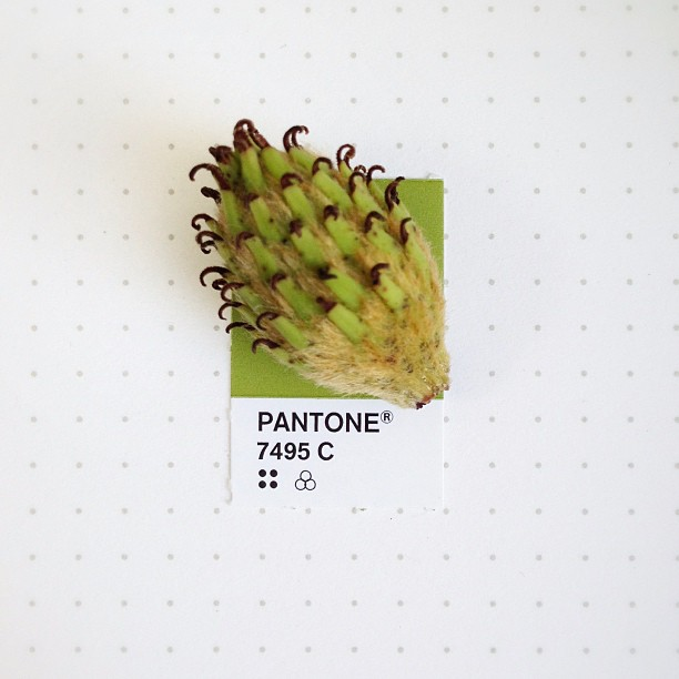 Pantone_7495_C